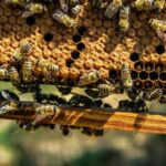 Beeswax Melter Alternatives